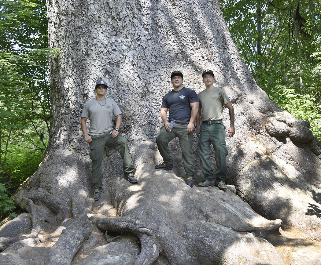 201806 _MAG4653 Big spruce