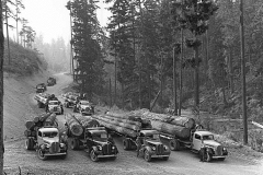Trucks Hauling Logs 1939