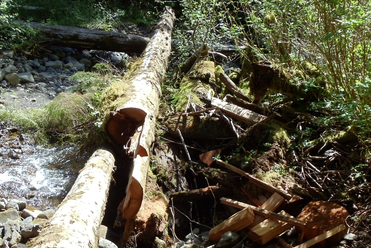 Cedar Theft in a RMZ Fish Bearing Stream
