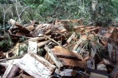 Cedar Theft Site