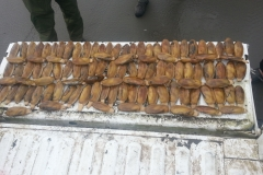 Razor Clam seizure from illegal harvest