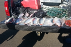 Seized Fish from an illegal sale