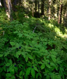 Quinault Plant Protection Project