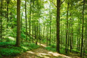 Quinault Forest Management