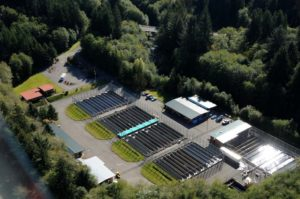 Quinault Hatcheries Program