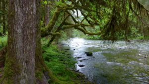 Quinault Water Protection Project