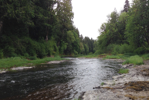 Chehalis River Basin | Quinault Indian Nation