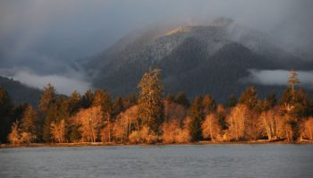 Lake Quinault Ownership | Quinault Indian Nation